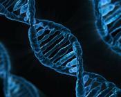 """年内市值蒸发八成 华大基因""""伪科技""""之谜"""